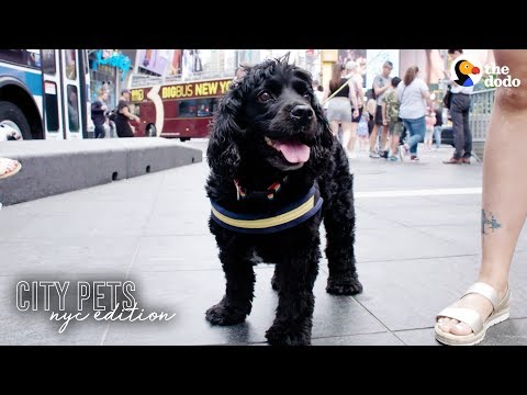 Rescue Dog Loves Being A Spongebob Broadway Star | The Dodo City Pets