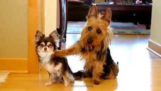Veja qual a reação desses cachorros quando a dona pergunta quem fez bagunça