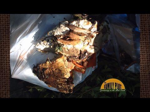 Halamang-singaw sa paanan sa pagitan ng toes pambansang paggamot