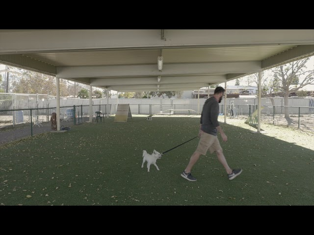 Video #10: Left Hand Turn Small Dog