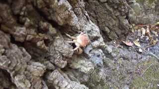 preview picture of video 'Vacation at Greece ( Rhodos ) Crab'
