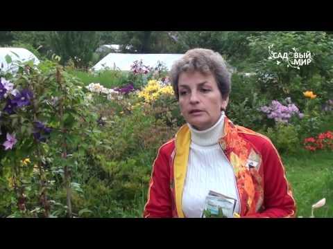 Основные паразиты растений и способы борьбы с ними