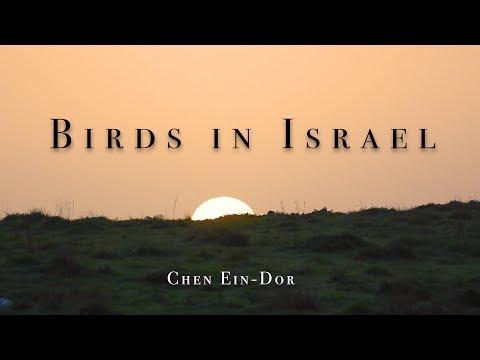 ציפורים בישראל – טעימה קטנה ממה שאפשר לראות בשמי ארצנו