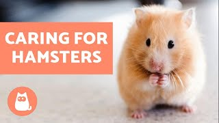 How to Look After a Hamster - Basic Care Needs