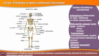sistemul articular)