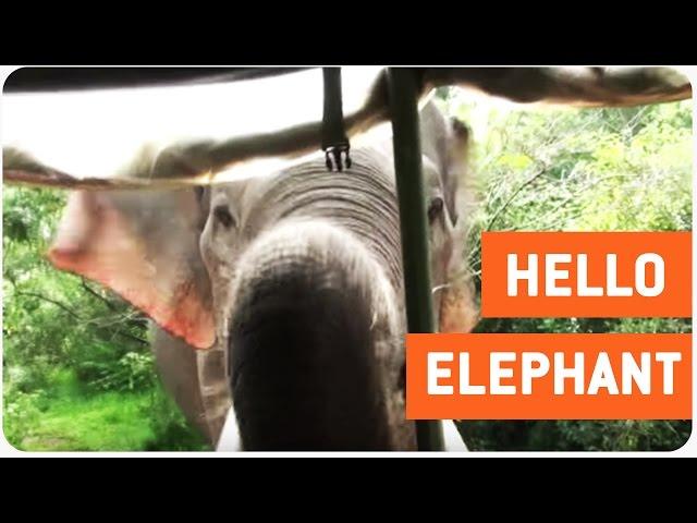 سيّاح يصابون بالذعر عند إقتراب فيل صغير من سيارتهم