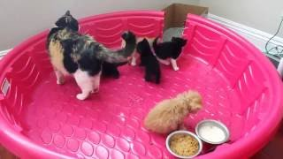 HOW TO LITTER TRAIN WEANING KITTENS