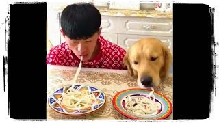 ПРИКОЛЫ С ЖИВОТНЫМИ | FUN WITH ANIMALS #519