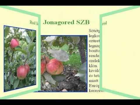 Kenet az eredmények növényvilágának értelmezésére