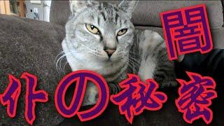 元捨て猫から保護猫そして幸せな家族に😸 Cat