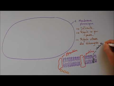 Conjunctival squamous papilloma treatment