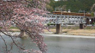 桜と近鉄16000系Y08-51編成喫煙室未設置特急吉野行き吉野川橋梁通過