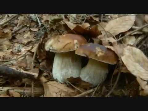 Medicina contro gambe di fungo