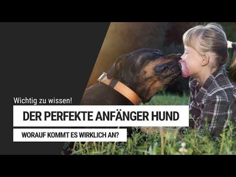 Der perfekte Anfänger Hund - Welche Hunderasse passt zu mir? | Welpenerziehung by Vitomalia