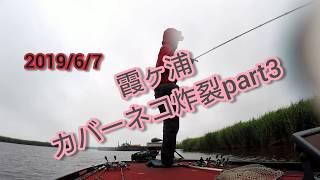 吉田尚晃 撮影 霞ヶ浦カバーネコ炸裂part3