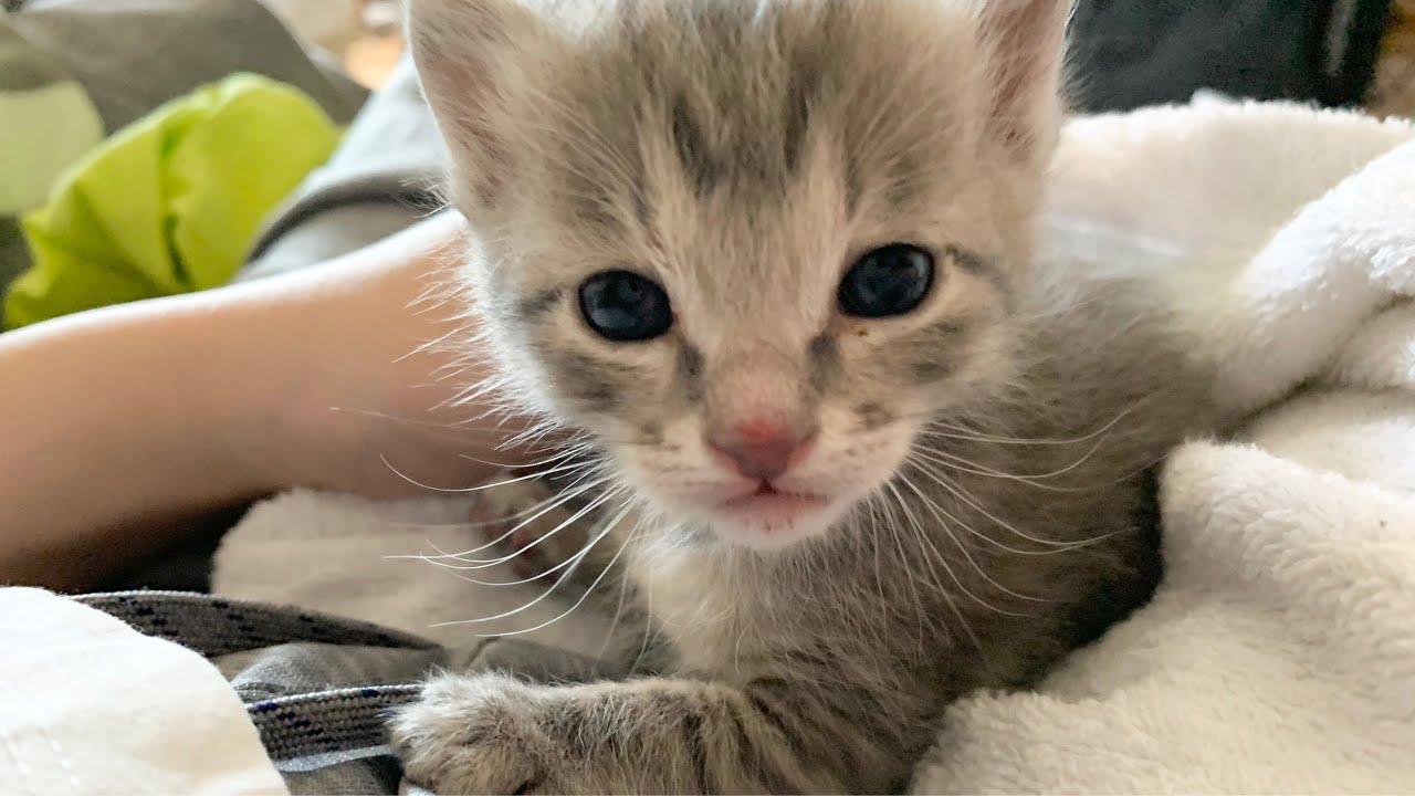 【保護子猫】保護した子猫が大腸炎という病気でした
