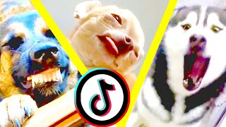 1 hour of Funny and Cute Pets for 2021 | You Laugh You Lose | Funny Animals tiktok compilation