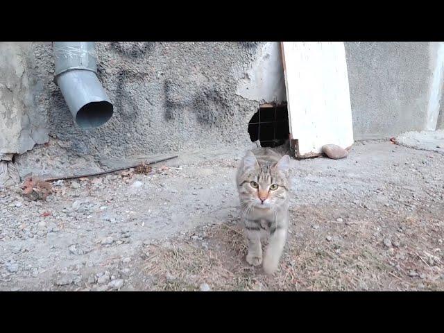 Судьба бездомных кошек в надёжных руках