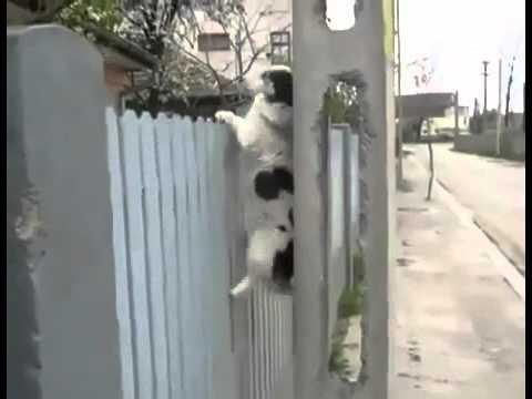 כלב אקרובט שמסווה את הבריחה שלו