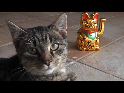 Katze vs. Winkekatze