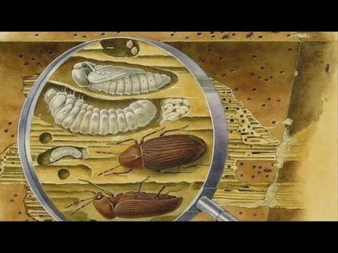 Анализы на основных паразитов