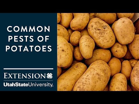, title : 'Common Pests of Potatoes