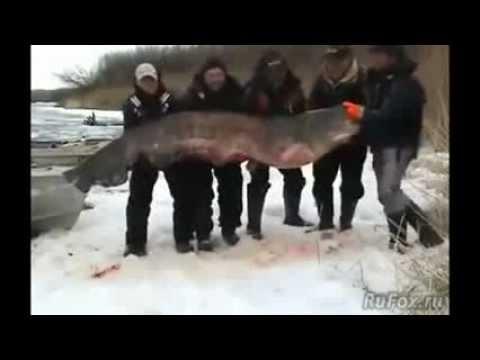 Linverno pescando sul serbatoio di Rybinsk di video per guardare