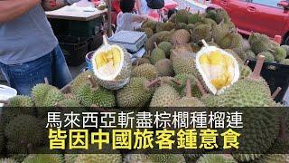 思浩話你知馬來西亞斬盡棕櫚種榴連,皆因而家係中國旅客主導特產潮流!(大家真風騷)