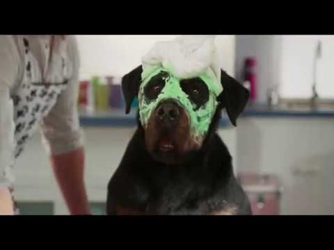 Show Dogs (Trailer 'The Best')