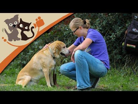 Das Hundehalsband: Die Vor- und Nachteile