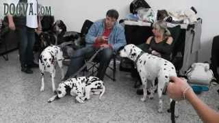 preview picture of video 'NITRA CACIB 2013 - Medzinárodná výstava psov - International dog show'