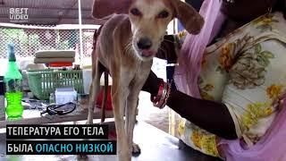 СОБАКУ СПАСЛИ ОТ СМЕРТИ!!!!!!!!!! добрые люди подобрали и помогли животному!