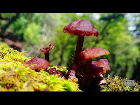 सुन्दर सर्केगाड यात्राको भिडियो अाउँदै छ केहि दिनमा..beautiful t.video of Sarkegad Coming soon …..