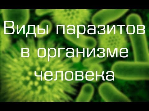 Эффективные средства от паразитов в организме человека