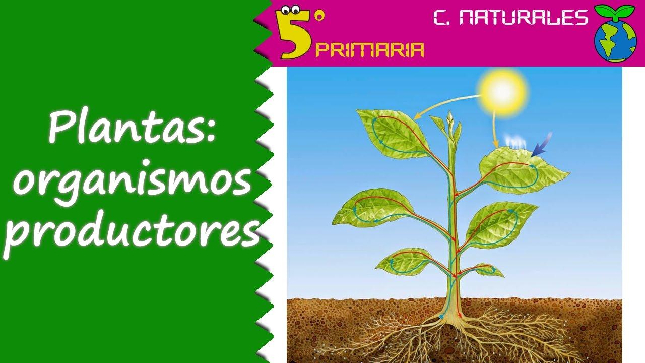 Plantas: organismos productores. Tema 6