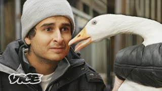Animals Debate Pop Culture Through Pet Psychics