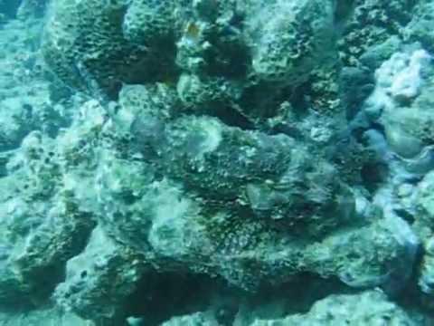 Diving Akassia, Tauchplatz Abu Dabab, zw. El Quseir und Marsa Alam, Abu Dabbab (Marsa Alam),Ägypten