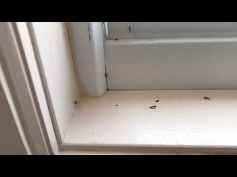 It's imperative to make sure that the ventilation in your bathroom is working efficiently to help dry out the bathroom and prevent mold growth. If not, then you run the risk of a pest problem, which is exactly what happened to this homeowner in Eatontown, NJ who had an infestation of carpenter ants in her bathroom.