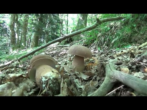 Iodio da un fungo di unghie di una fotografia