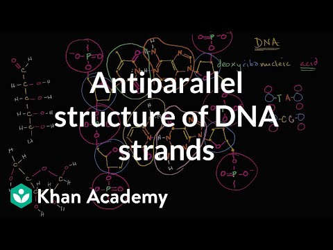 Solving The Structure Of Dna Worksheet Answers - Nidecmege