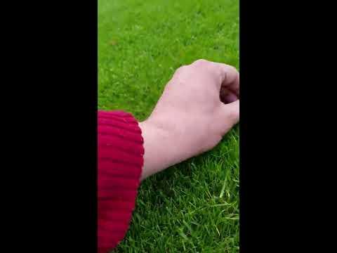 Wie bekommt man saftigen, grünen Rasen?