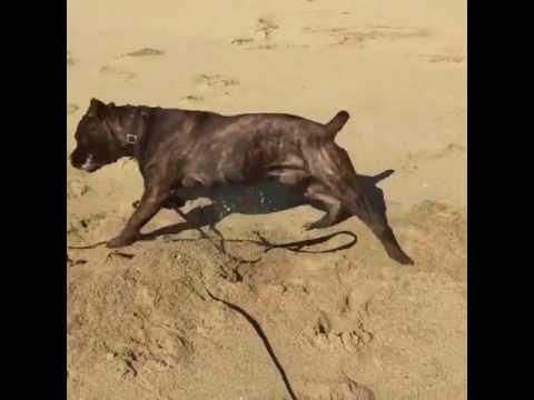 Anteprima Video Cane scatenato in spiaggia...