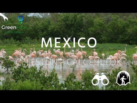 Celestún Reserve & Calcehtok Caves – Mexico
