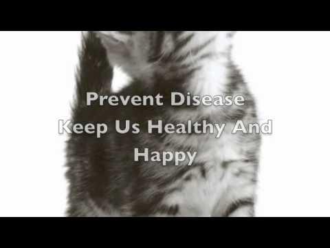 Kangen Water For Pets