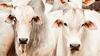 Pecuária brasileira está preparada para uma nova explosão da demanda por carne bovina no 2º semestre