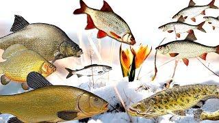 Когда начинает клевать рыба после схода льда