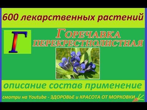 горечавка перекрестнолистная 600 лекарственных растений