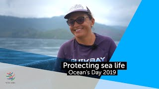 Ocean's day: protecting sea life