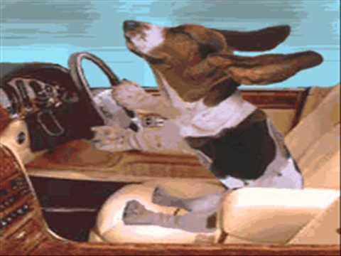 Ƹ̵̡Ӝ̵̨̄Ʒ Peter Alexander - Mein Hund jagt im Himmel die Engel Ƹ̵̡Ӝ̵̨̄Ʒ.wmv