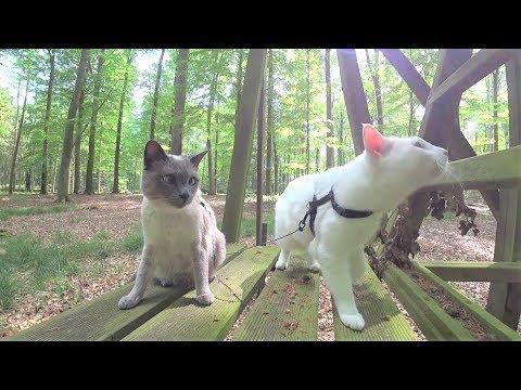 Anleitung: Wie man eine Katze NICHT an die Leine gewöhnt/Gassi führt - 12 Häufige Fehler